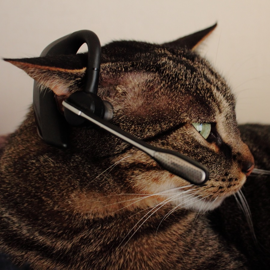 Kato, the OpenmarketigTC Watchcat
